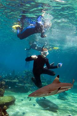 mergulho-com-tubaroes-5